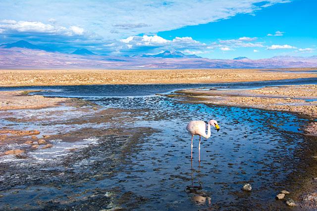 white and green san pedro de atacama tour altiplanic lagoons